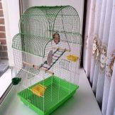 Клетка для птицы своими руками