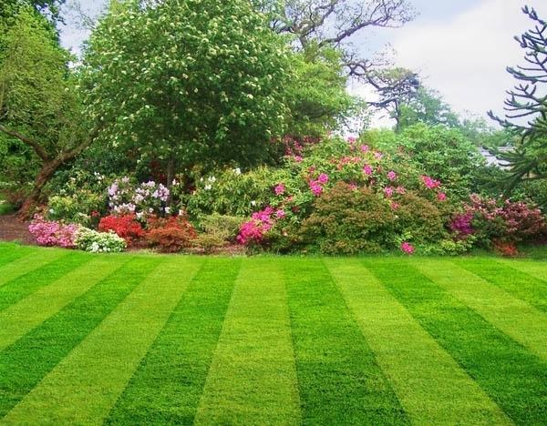 Идеальный газон своими руками