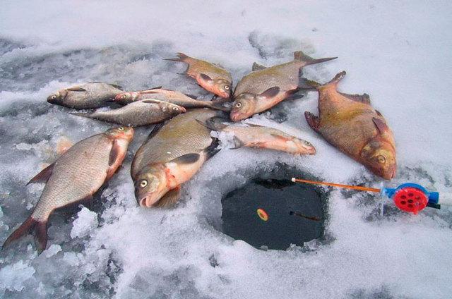 Коромысло для ловли леща летом и зимой своими руками