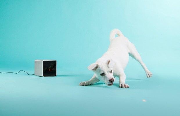 Лазерная указка для собак своими руками