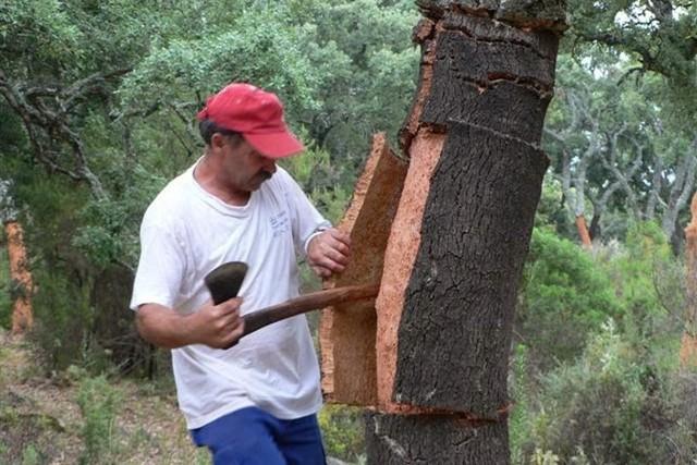 Ведро из дерева своими руками