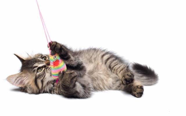 Игрушка для кошки как сделать своими руками