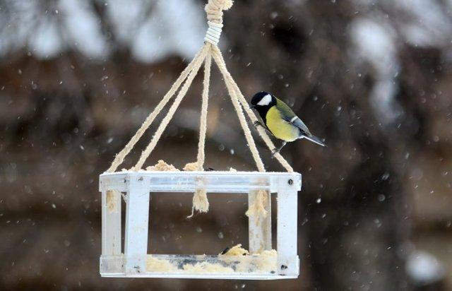 Кормушка для птиц из дерева своими руками