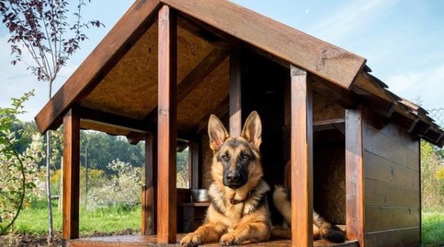 Теплая будка для собаки своими руками