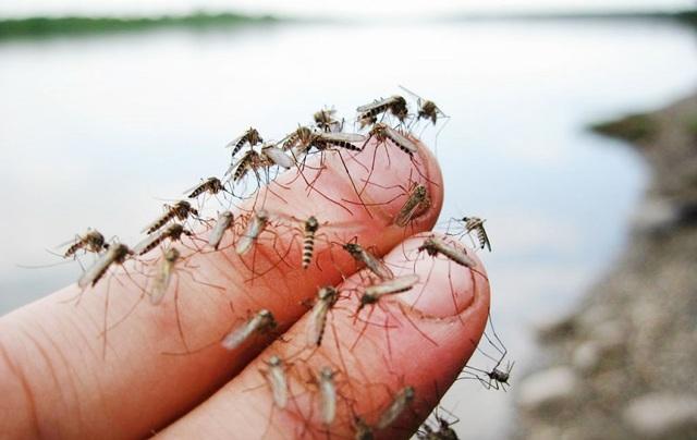 Ловушка для комаров своими руками