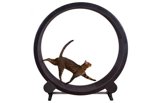 Тренажер-колесо своими руками