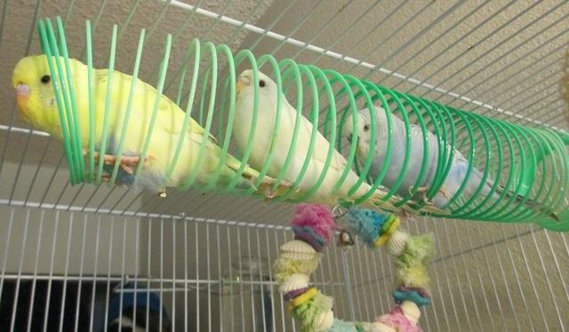 Качели для попугая своими руками
