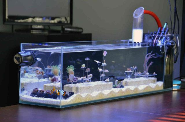 Бескаркасный аквариум своими руками