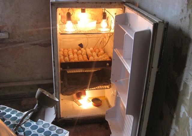 Инкубатор из холодильника своими руками