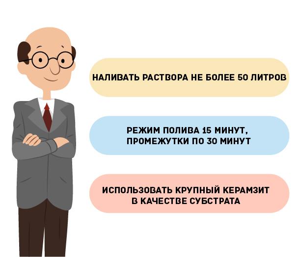 Бюджетный вариант гидропоники своими руками
