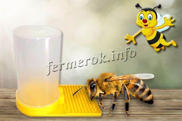 Как сделать внутрелетковую поилку для пчел своими руками