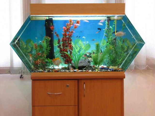 Двухуровневый аквариум своими руками