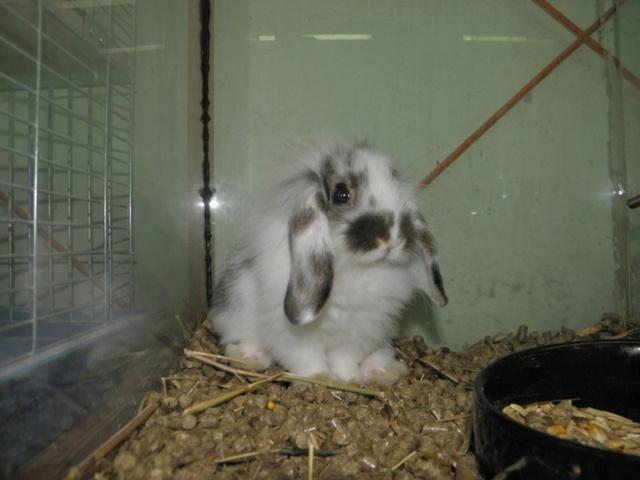 Раскладная клетка для кролика своими руками