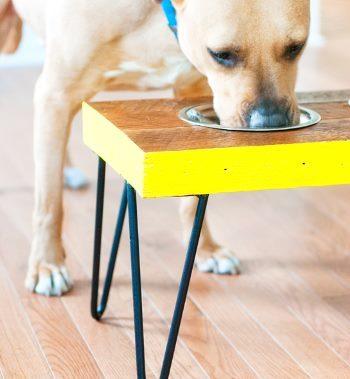Стол для собаки в форме кости своими руками
