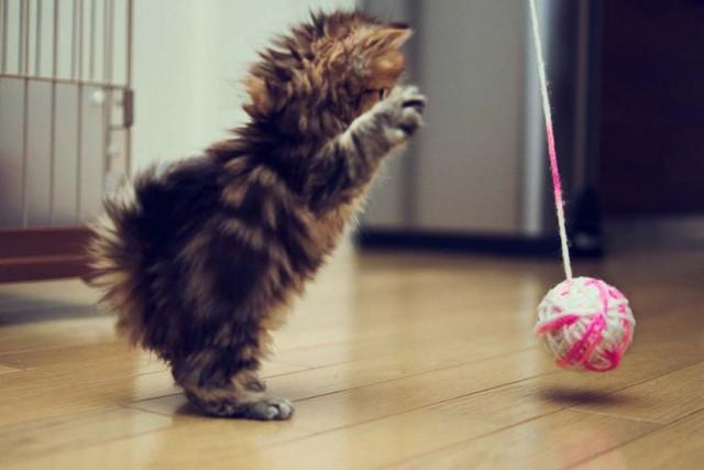 Лазерная игрушка для кота через интернет своими руками