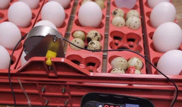 Устройство для автоматического поворачивания яиц в инкубаторе своими руками