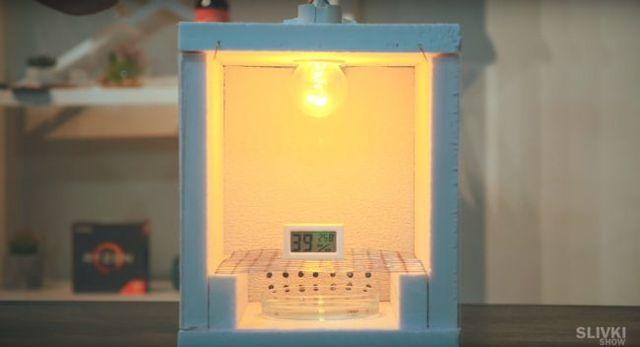 Инкубатор для перепелиных яиц своими руками